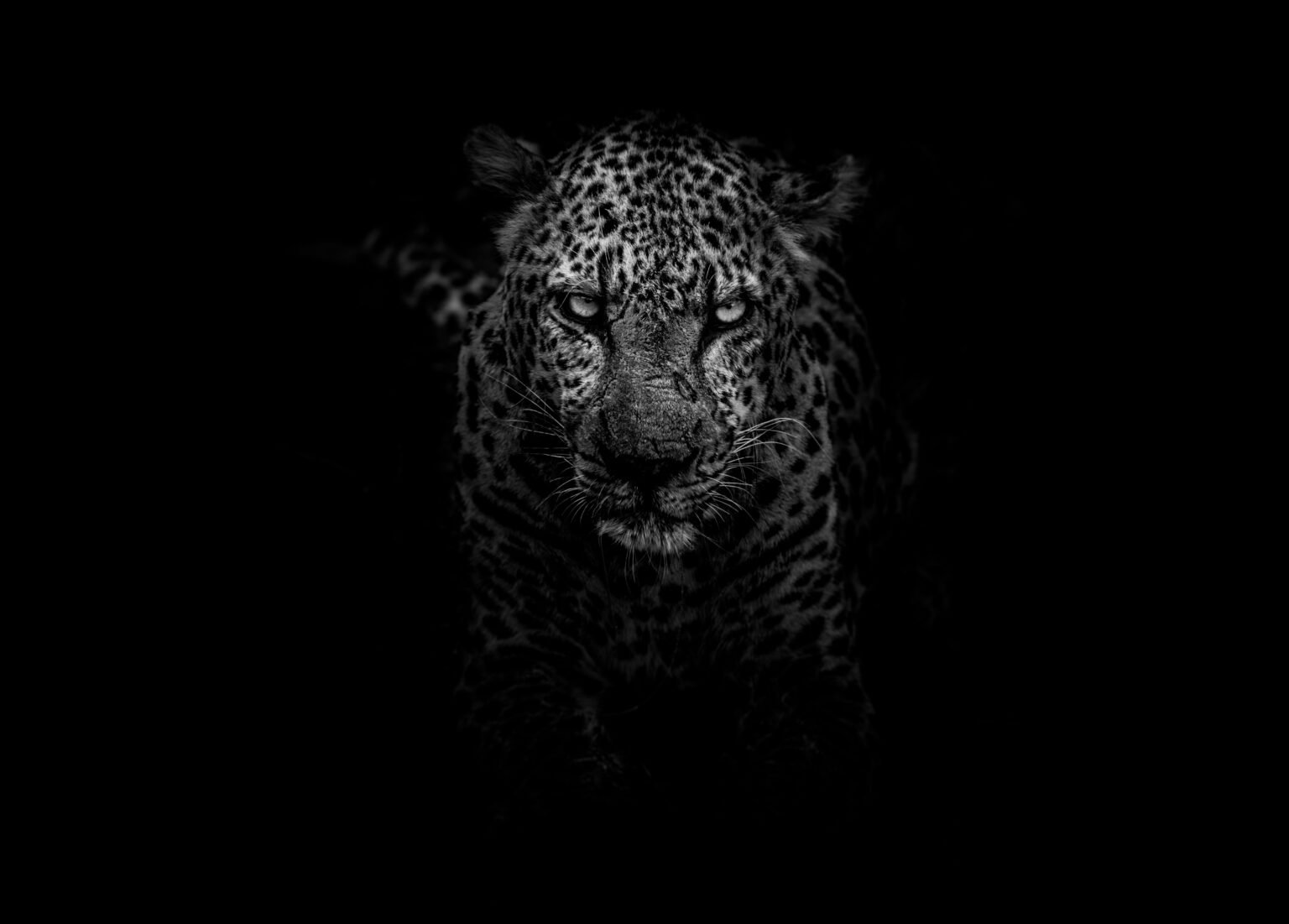 A leopard in the shadows trying to find the best way to build a monster personal brand